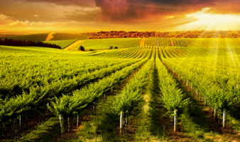 Agricultural Lending Online Training Course